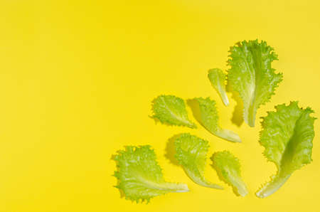 Fresh green leaves with shadow on yellow backdrop as border, top view, copy space. Food color background. 免版税图像