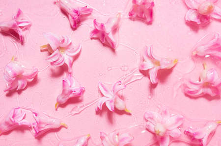 Spring pink wet hyacinth flowers with gold glitter glowing under cosmetic transparent gel on pink background, top view, pattern.