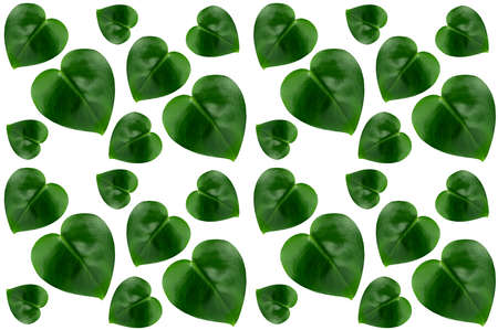 Green glossy different leaves as heart, seamless pattern isolated on white background.