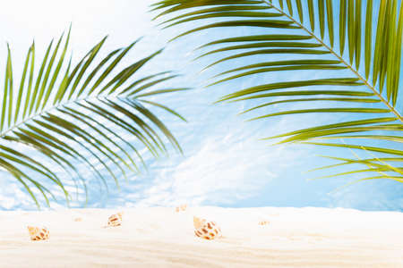 Summer sunny tropical beach with green palm leaves, white sand, sun glare, seashells and sea view, nobody. Empty landscape for presentation, design.