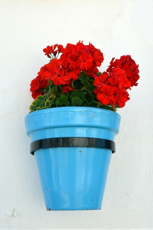 Flowers in a flower pot on the wall photo