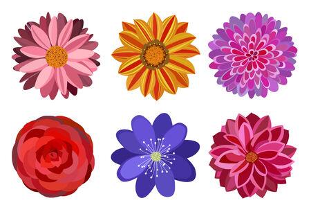 multi: Six beautiful multi colored flowers for ornament Illustration