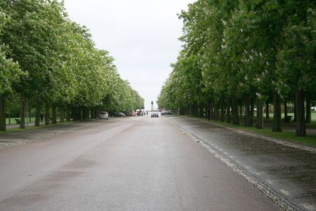 greenwich: tree lined road in Greenwich park, London Stock Photo