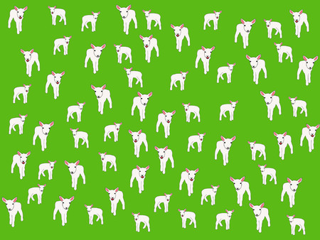 many lambs in field springtime illustration background Vector