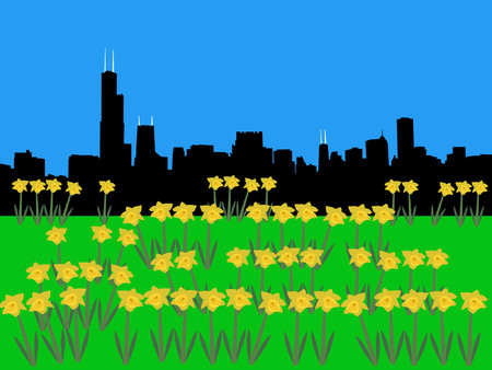 Chicago Skyline in springtime with daffodils