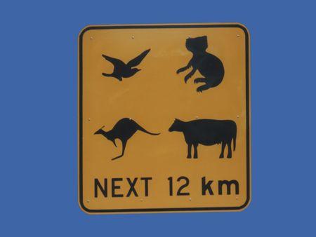 Australian wildlife koala bear, kangaroo, bird and cow Stock Photo - 817578