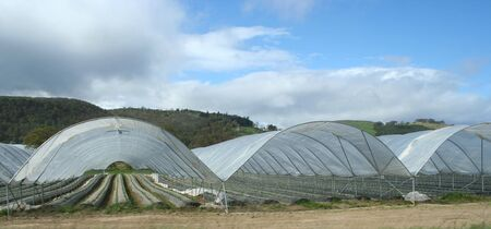 modern farming in plastic sheeting greenhouses