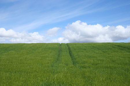 arable: field of arable crops in spring