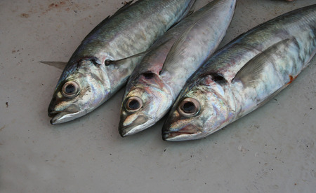 Three fresh fish on work surface Stock Photo - 1511402