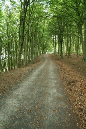 maintained: well maintained path through woodland Stock Photo