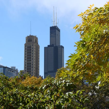 the sears tower: Sears Tower Chicago with autumn colour Stock Photo