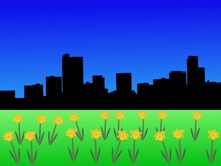 denver: Denver skyline in spring with daffodils