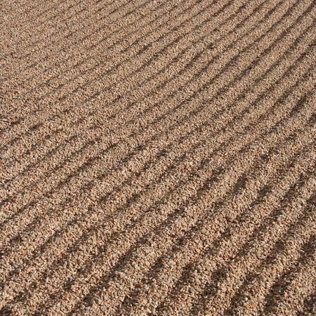 raked: Raked gravel background with parallel ridges