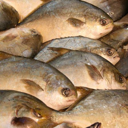 close up of fresh fish at a market Imagens