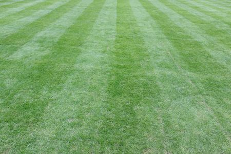 cut grass: Lawn cut with converging stripes background