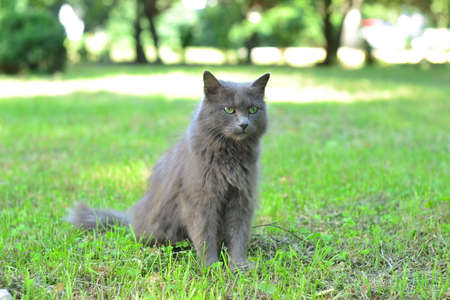 earnest: Serious cat sitting on the green grass