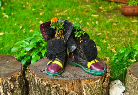 flowerpots: Marigold flowers growing in boots flowerpots Stock Photo