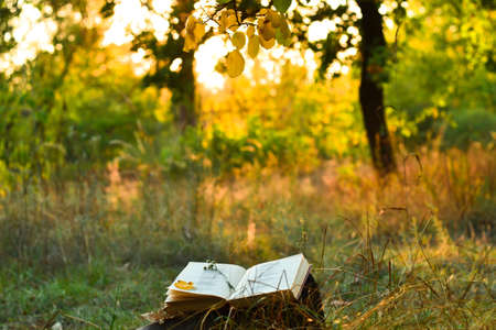 under the tree: Vintage book of poetry outdoors with fallen leaves on it, under a tree in front of blurred sunset