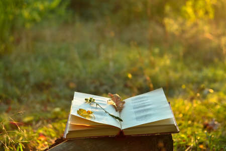 Vintage book of poetry outdoors with fallen leaves on it