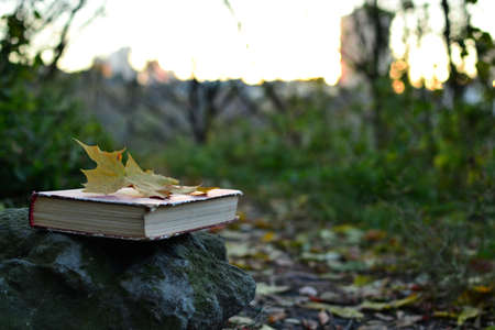 paper art: Vintage book outdoors on a stone Stock Photo