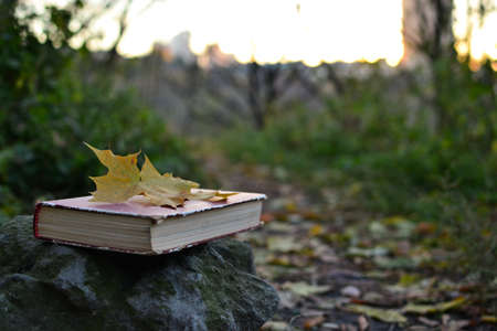fallen leaf: Vintage book with fallen leaf on it Stock Photo