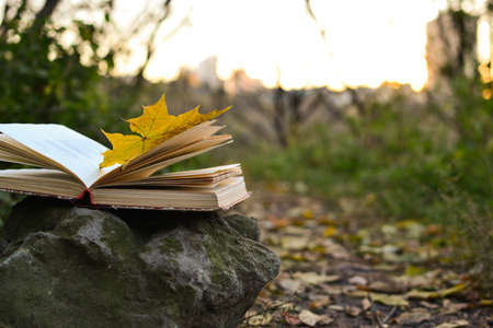 libro abierto: Open book outdoors with fallen leaf on it