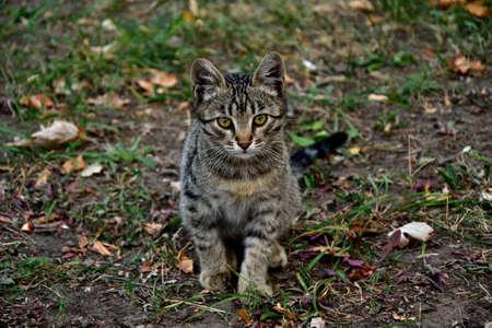 housecat: Cute kitten outdoors