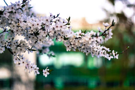 green background: Spring flowers