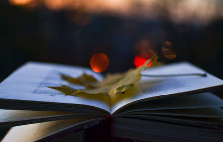 poems: open book of poetry in the evening with fallen leaf on it