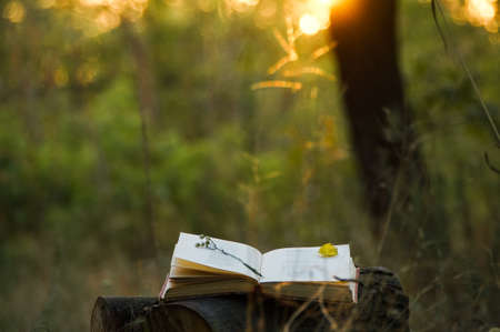diaries: Poetry book under tree and blurs of summer sunset background