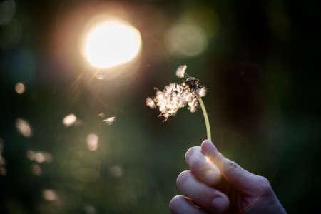 Persoon die paardebloem in hand het wegblazen van een wens houden