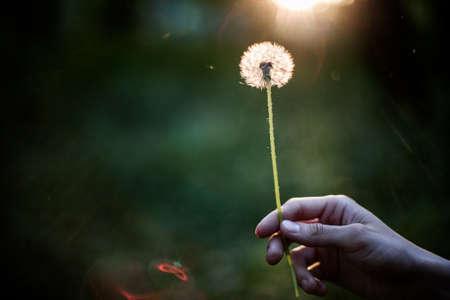 De holdingspaardebloem die van de persoon in hand een wens maakt