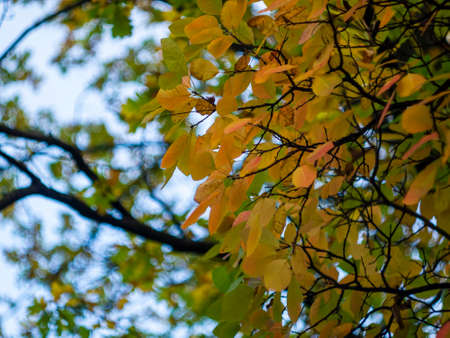 The transition from summer to autumn. Close-up of autumn red and yellow tree leaves on blurred background in sunny weather