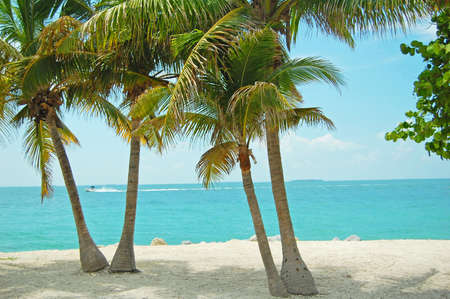 view out to sea between palm trees on tropical beach photo