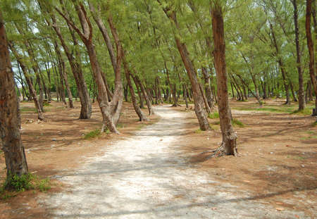 woodland and nature trail at fort zachary taylor historic state park, key west, florida photo