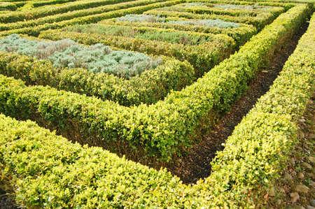 topiary: topiary hedge design in garden Stock Photo