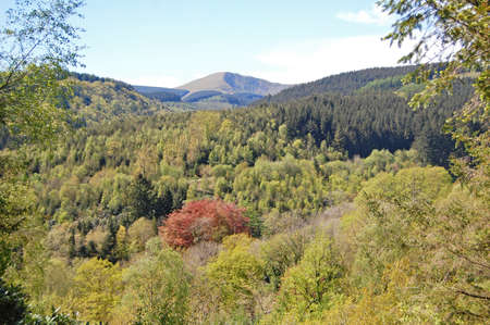 forest conservation: forested hills near Snowdonia in Wales