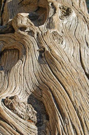 gnarled: close up of old gnarled tree log