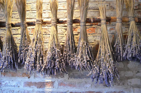 bundles: lavender bundles hanging for drying Stock Photo