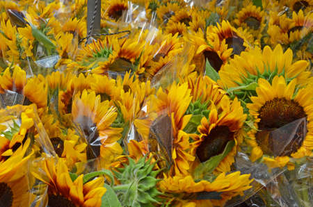 sunflowers for sale wrapped in cellophane