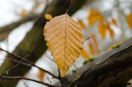 foglia: Yellow leaf Stock Photo