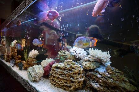 freshwater aquarium plants: close up of aquarium tank full of fish