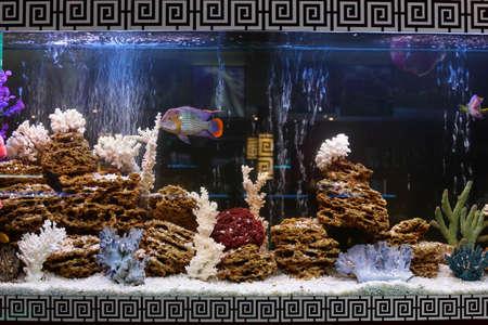 fish tank: close up of aquarium tank full of fish