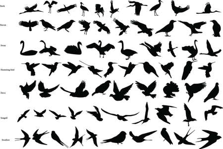 Silhouettes of storks, crows, doves, hummingbirds, swallows, swans and seagulls
