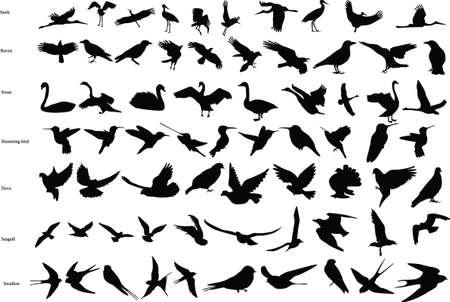 Silhouetten van de ooievaars, kraaien, duiven, kolibries, zwaluwen, zwanen en meeuwen