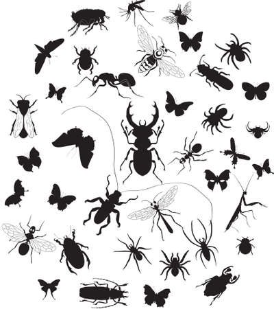 Vector set of insect silouettes isolated on white Illustration