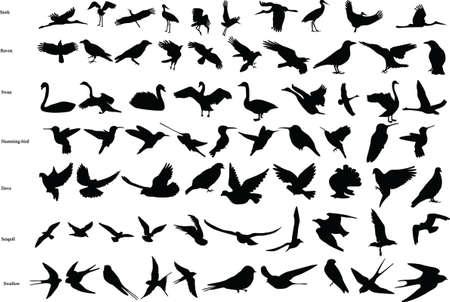 コウノトリ、カラス、ハト、ハチドリ、ツバメ、白鳥、カモメのベクトル シルエット