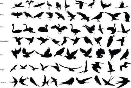 Vector silhouettes of storks, crows, doves, hummingbirds, swallows, swans and seagulls