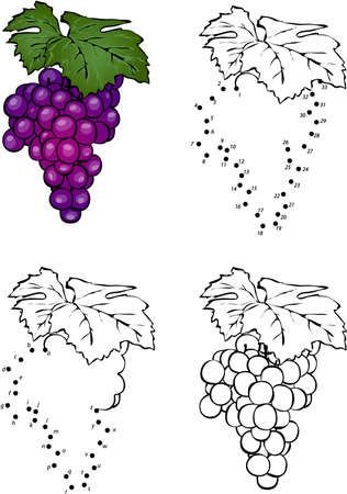 amuse: Cartoon grape. Vector illustration. Coloring and dot to dot educational game for kids