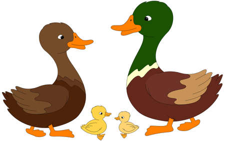 duckling: Set of duck, duckling and drake. Vector illustration for kids